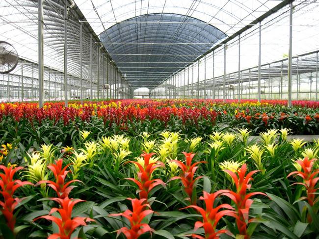 floriculture - définition