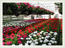 Floriculture Nets India